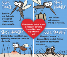 0001_AHS_Mighty_Mosquito_FNL