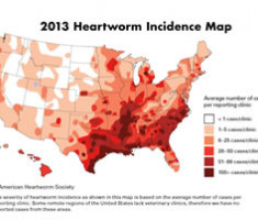 incidence-map
