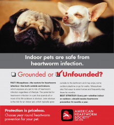 10 Indoor pets are safe 150dpi