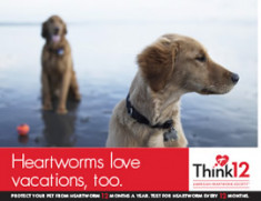 Heartworm-Love-Vacations-2